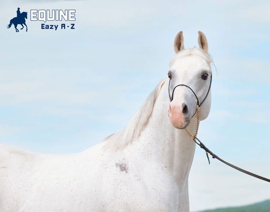 Equine Eazy A – Z